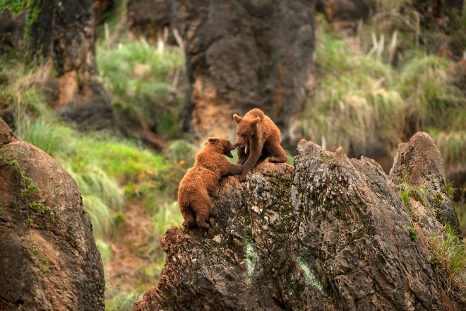2 Parque Naturaleza Cabarceno osos